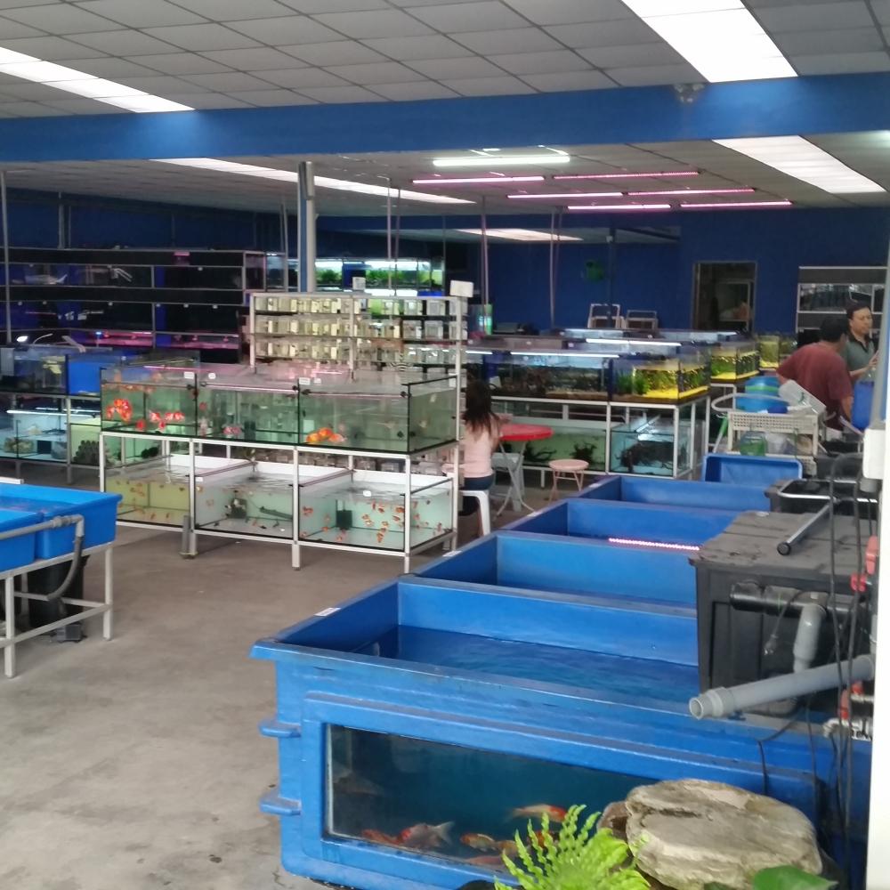 Affnan 39 s aquaponics aquapet aquarium shop for Aquarium shop