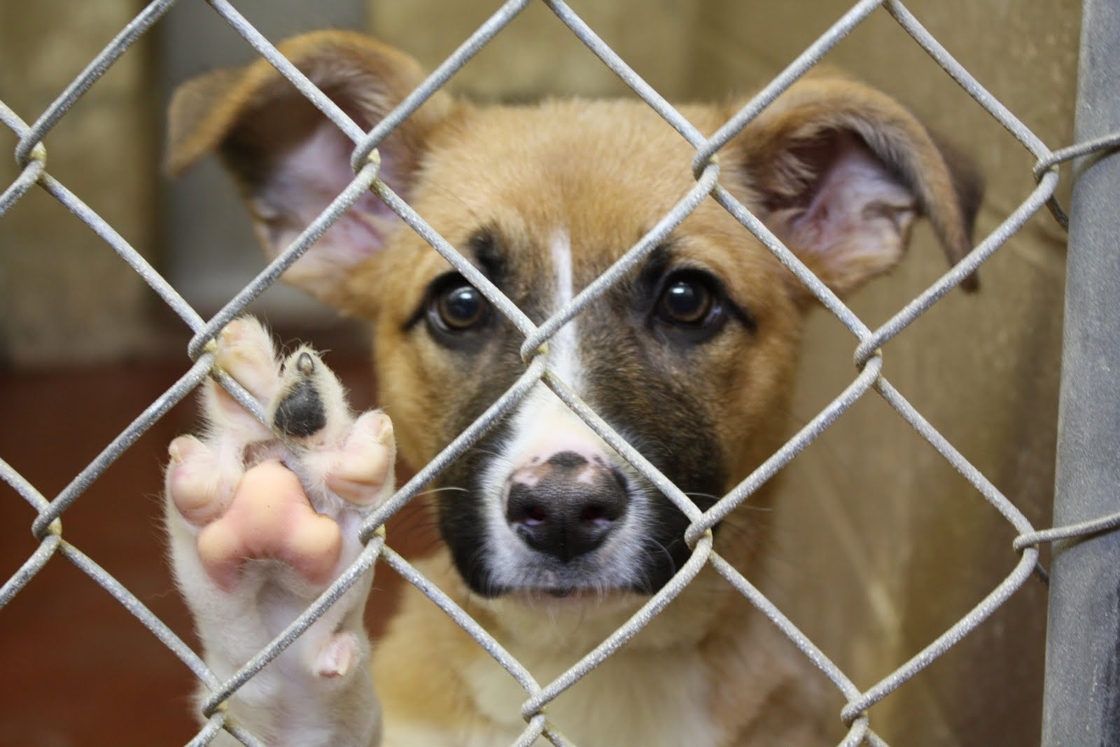hand in paw the crisis of pet overpopulation what you