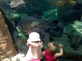 large fish with little kids looking through glass