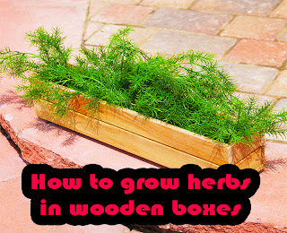 How to grow herbs in wooden boxes