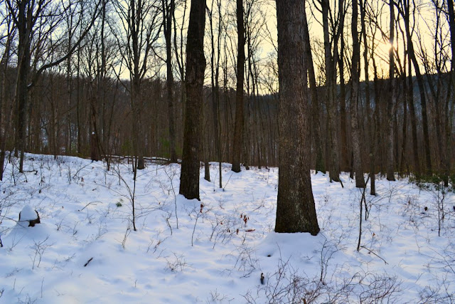 Woods blanketed in snow