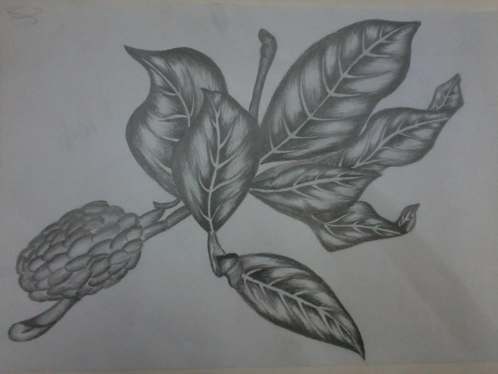 Bitki çizimleri karakalem