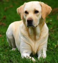 Por qué los perros viven menos que las personas