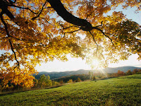 Autum Leaves and Forest Wallpapers