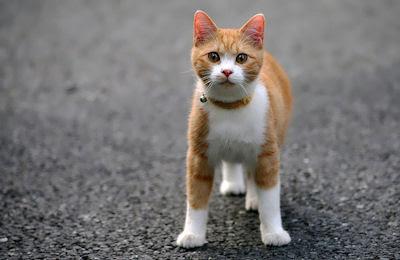 Un gatito muy bonito - Cute little kitten - Mascotas