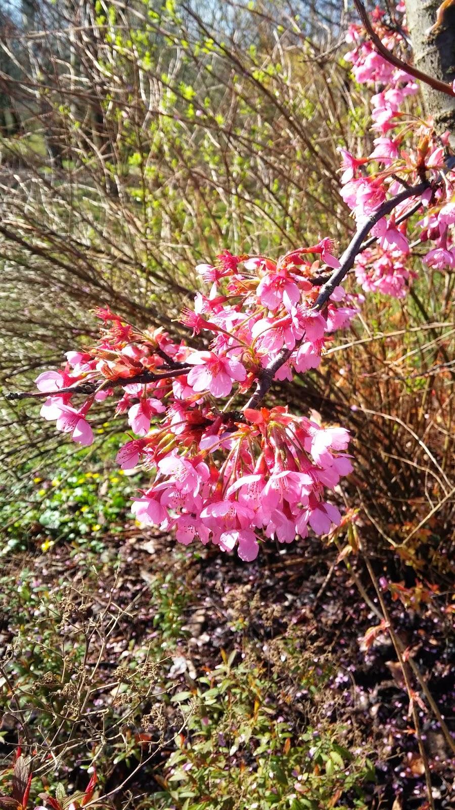 Öarnas trädgårdsplanering: april 2014