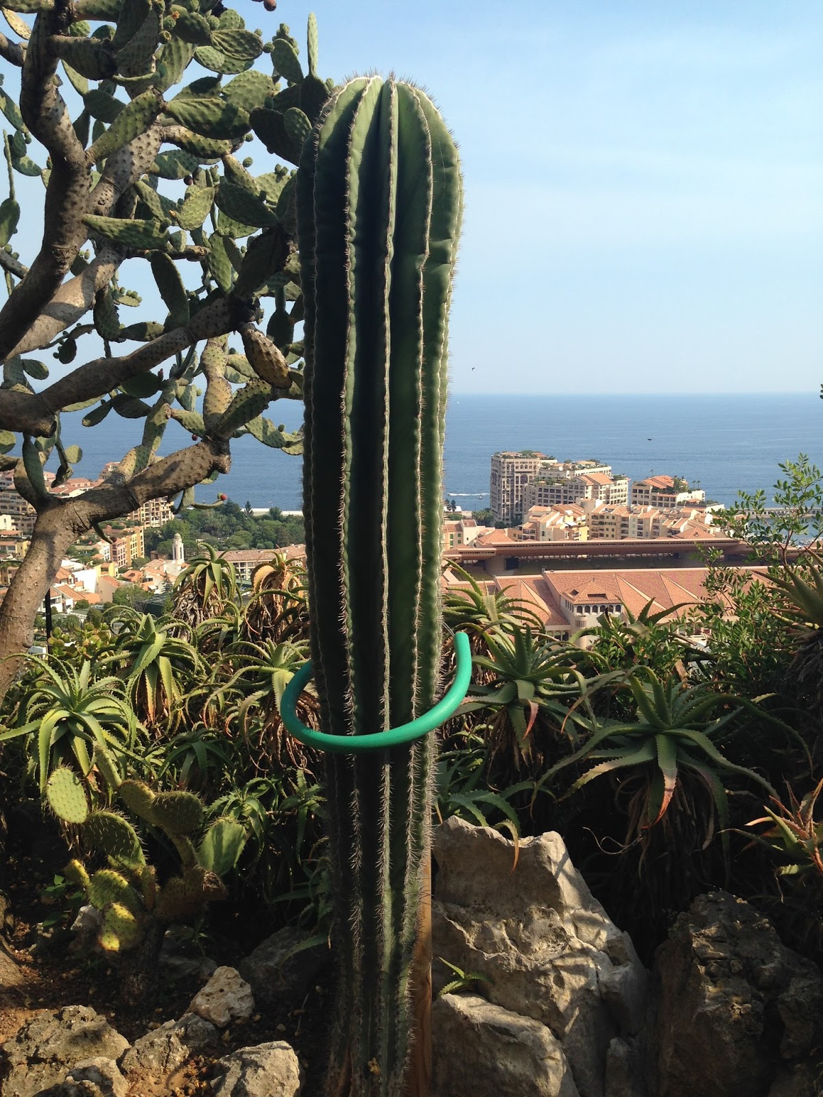 Succulent sundae jardin exotique monaco part 4 for Jardin exotique