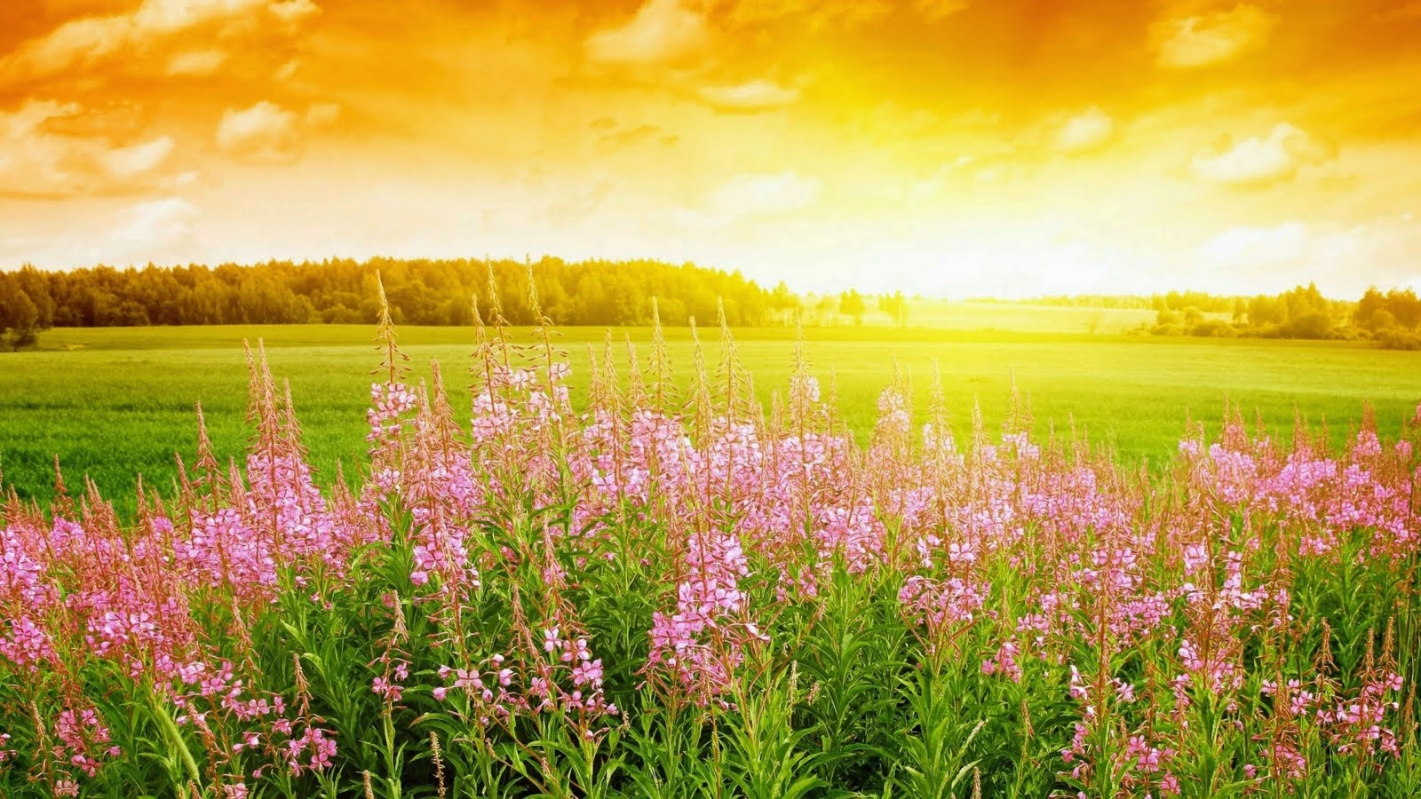 Beautiful Flower garden HD Wallpapers Images Pictures Photos