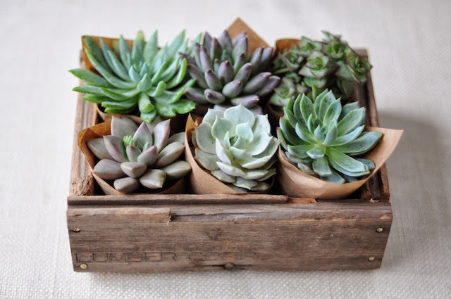 Decorating With Succulents T A N Y E S H