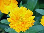 nos fleurs=notre santé