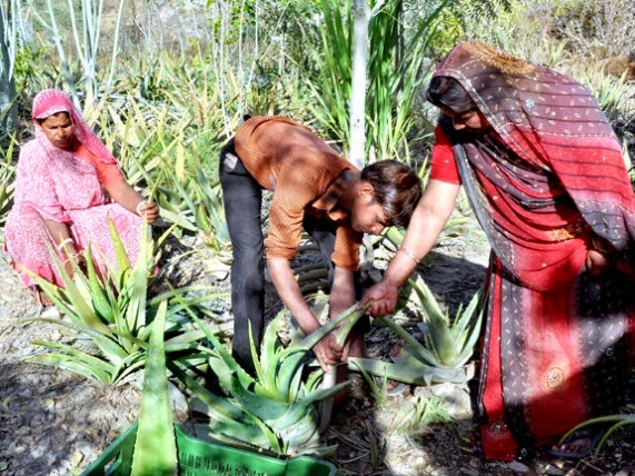 This Indian Village Plants 111 Trees Every Time a Girl Is Born