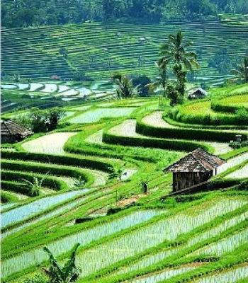 NTB Akan Cetak 5.700 Hektare Lahan Sawah Baru