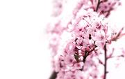 Dlatego małe odświeżanie bloga i kilka pozytywnych kwiatowych fotek, . (tap)