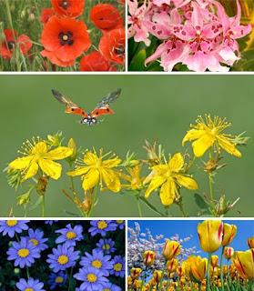 Картинки с цветами для рабочего стола