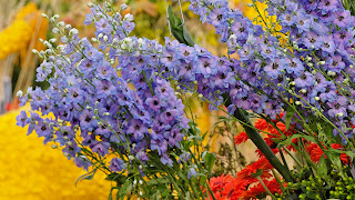 beautiful Flower Arrangement Netherlands background wallpaper ajd 1920x1080.jpg