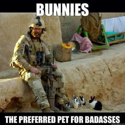 Veterans%2BDay rabbit ramblings funny bunny monday meme*day memorial day edition