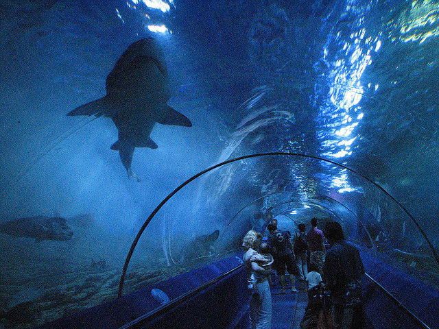 World Largest Aquariums | Googeli World