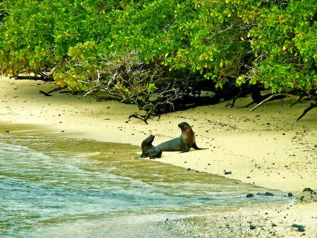 Beach Isabella Island Galapagos