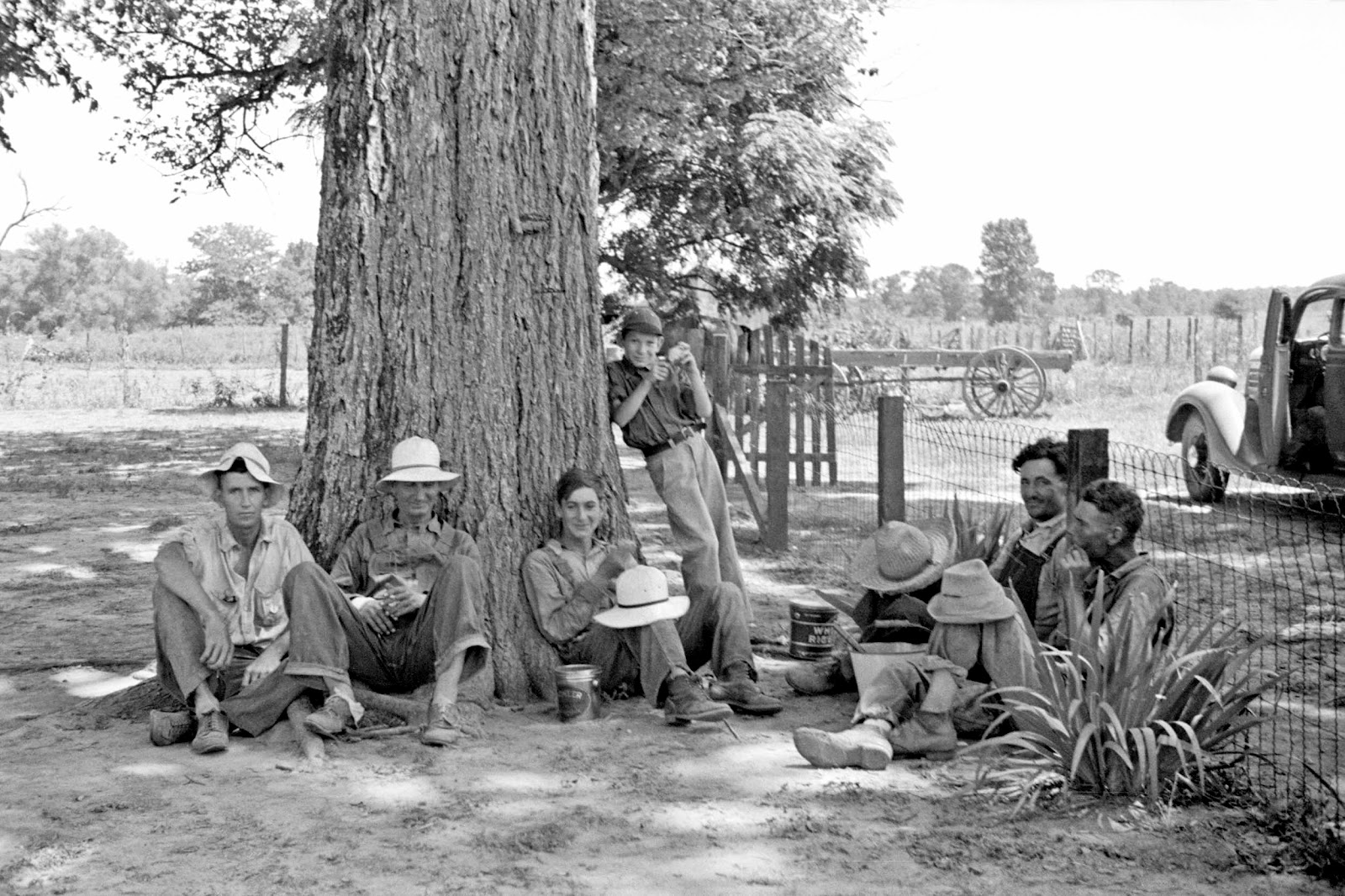 History in Photos: Arthur Rothstein  Cotton Plantations 1800s