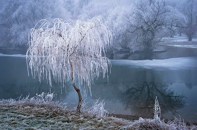 A Frosty Morning on the Rhine Photographed by Patrick Hübschmann