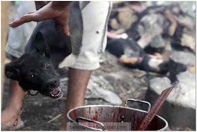 Foto Ngeri Sebelum Anjing Dijadikan Hidangan