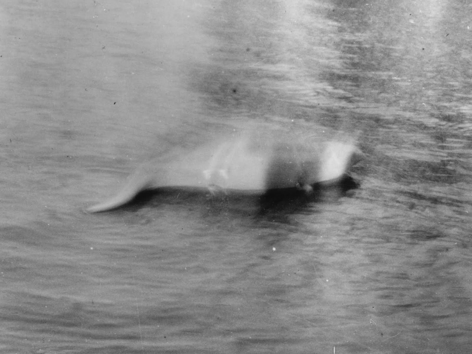lochness monster A group of scientists will use environmental dna to try to find evidence nessie the loch ness monster ever existed if nothing, team spokesman neil gemmell said they'll learn more about the water .
