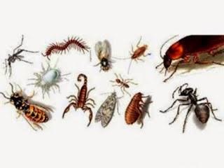 -insetos
