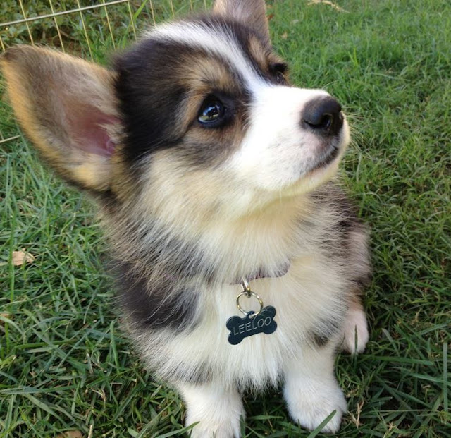 Cute puppy pictures, cute puppies, puppy photos, funny puppies, cute dogs