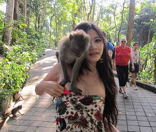 Monyet yang Nakal Tapi Beruntung