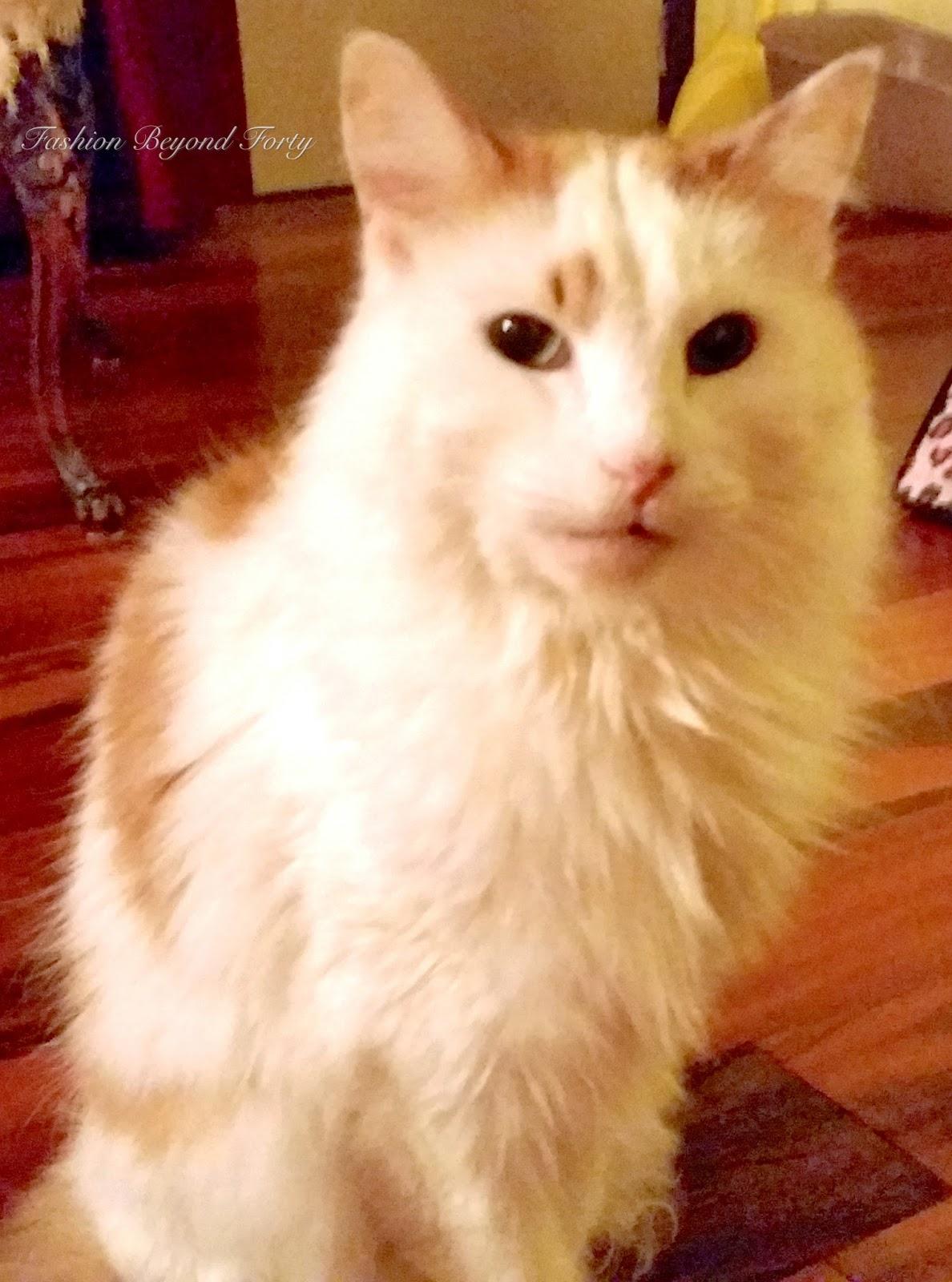 My Cat Vino
