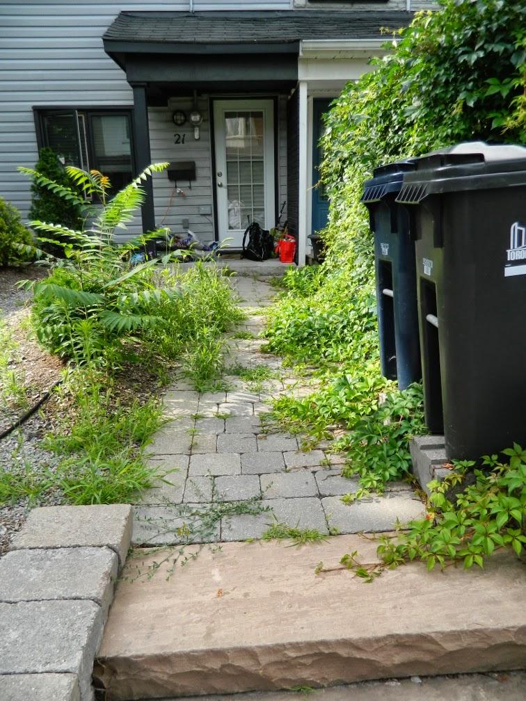 Leslieville garden cleanup front path before Paul Jung Gardening Services Toronto