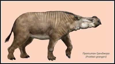 Perissodactyla extinta Protitan