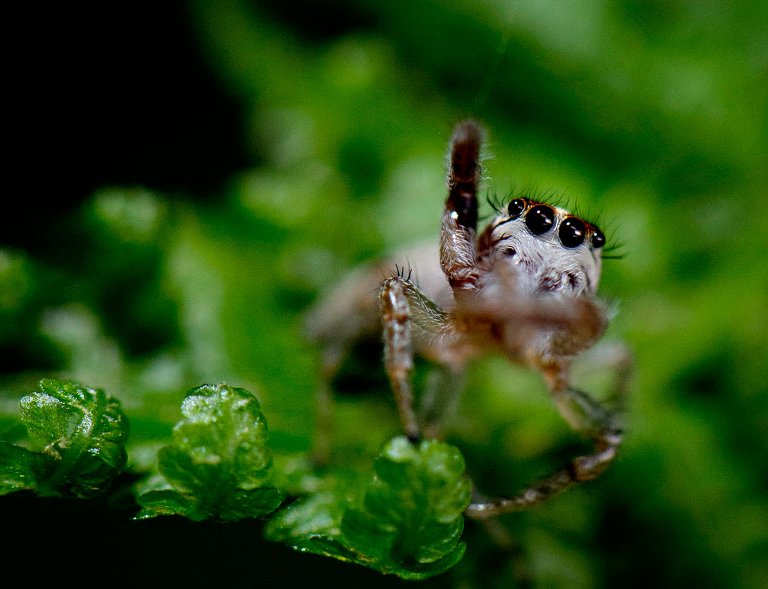 Robin Loznak Photography: Forest spiders Jumping Spider Web