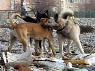 أستاذ في مواجهة 4 كلاب وهو في طريقه إلى العمل ؟