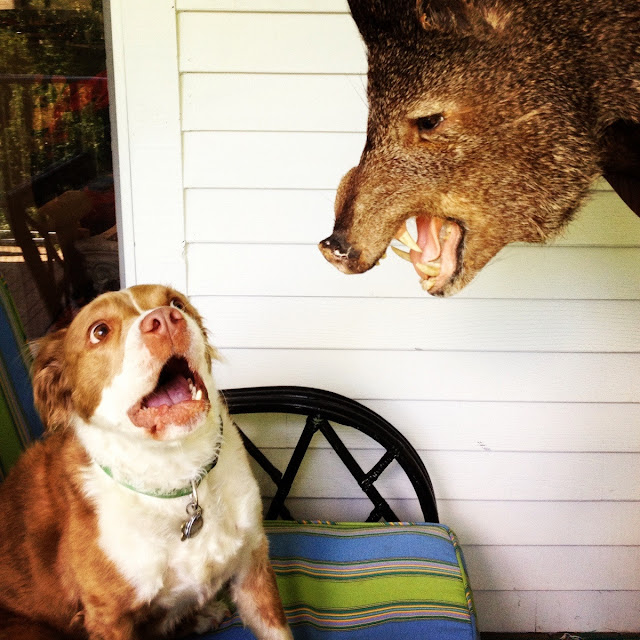 Funny animals of the week - 21 June 2013 (30 pics), funny animals, funny animal photos, animals pics
