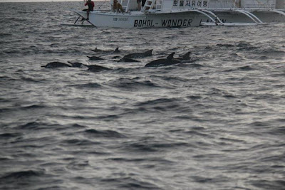 dolphind-during-our-whale-watching
