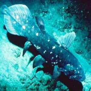 ... meter di bawah laut namun kadang kadang bisa berada