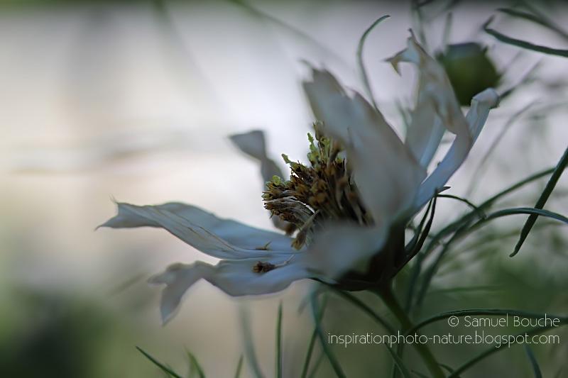 macrophotographie fleur du jardin