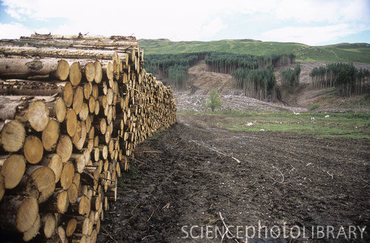 geography forest deforestation Forests form a large part of the gcse geography syllabus this quiz is all about  deforestation - the deliberate destruction of forests deforestation is the.