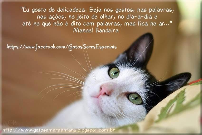 Gatos Amaraantara Frases Gatos Março 2014