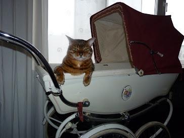 My spoiled cat in Inne's 48 year old Silver Cross