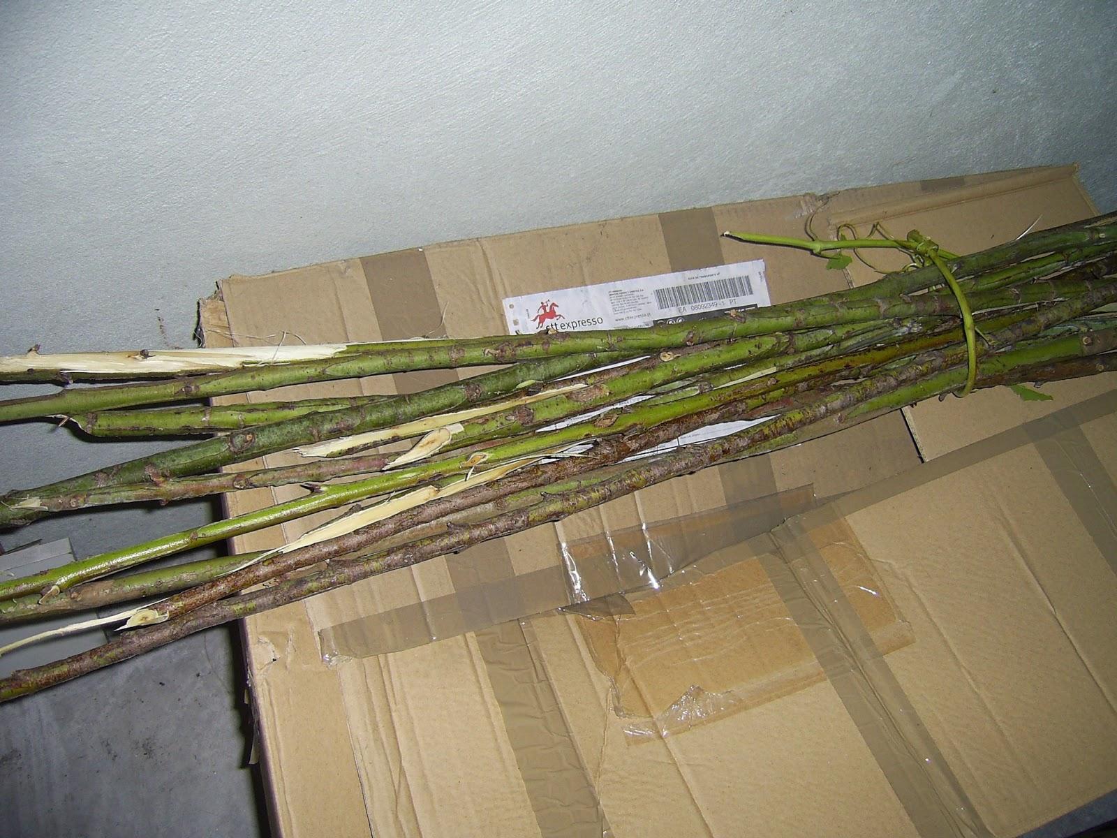 eucalipto estacas