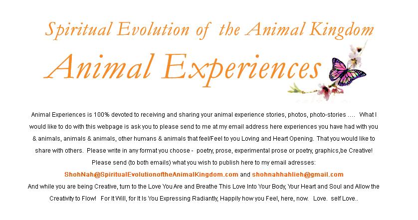 Animal Experiences