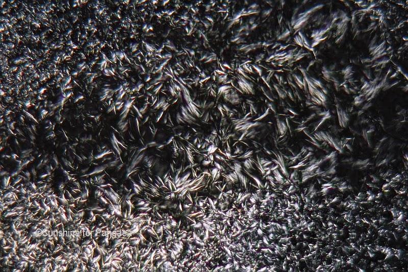 Hypogymnia physodes lichen acid