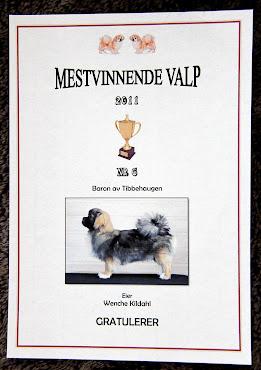 Baron Av Tibbehaugen. Ozzy. Han ble nr. 6 på Mestvinnerlista VALP 2011.