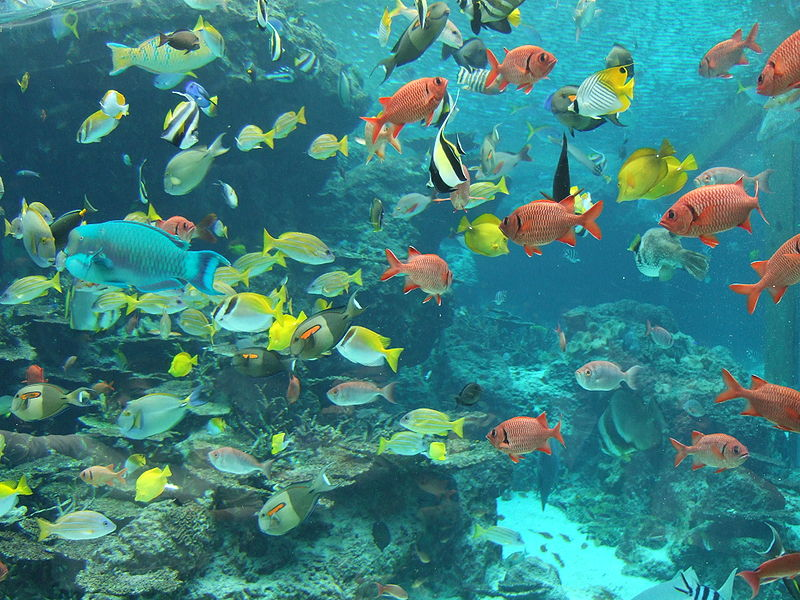 Okinawa churaumi aquarium in japan facts pod for Freshwater fish facts