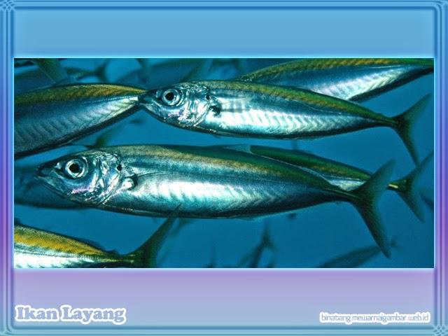 Gambar Ikan Layang