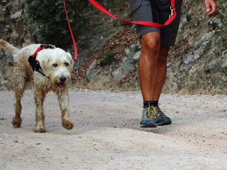 Excursiones para perros
