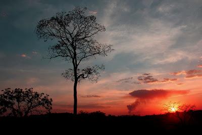 Pôr do sol do Cerrado
