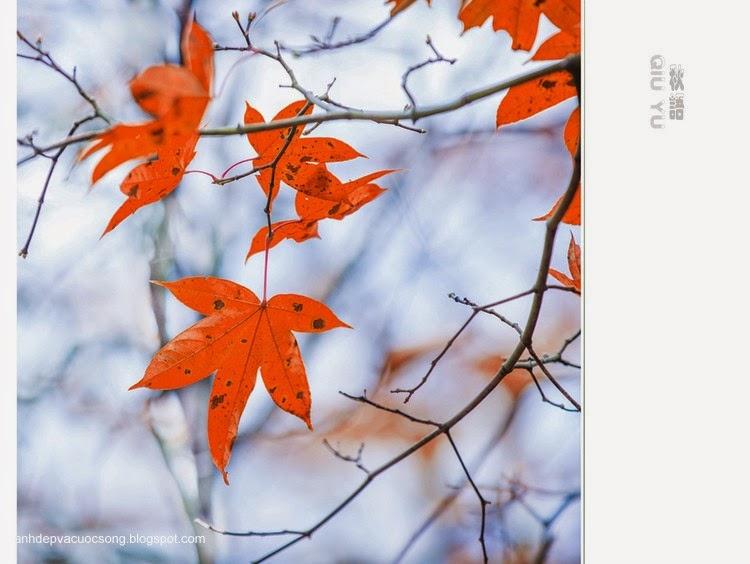 Chiếc lá mùa thu 3